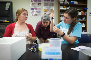 Bachelors in biology students practice molecular biology